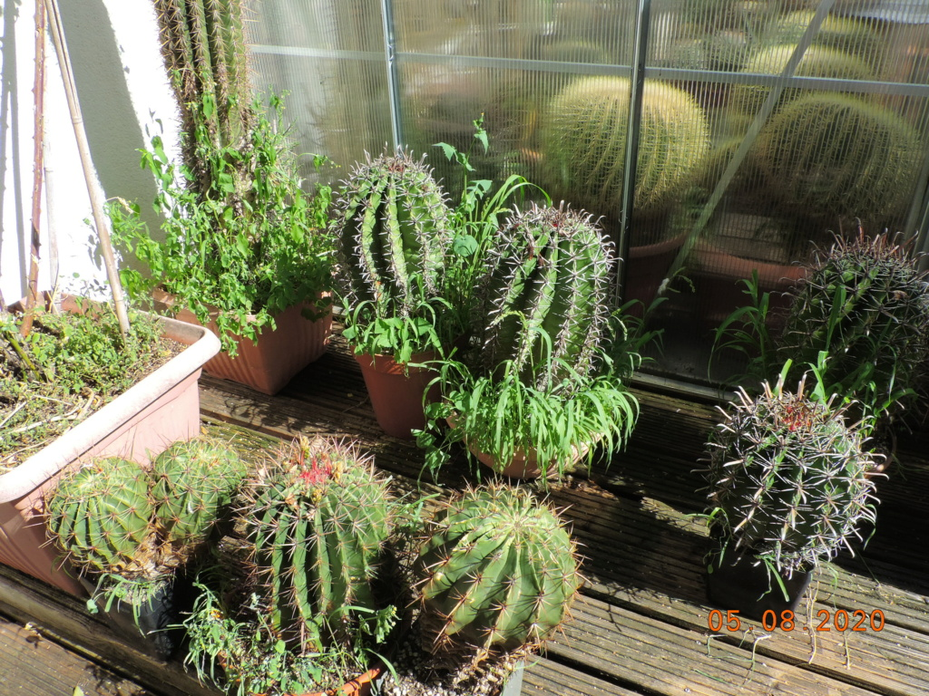 Cacti and Sukkulent in Köln, every day new flowers in the greenhouse Part 240 Bild5982