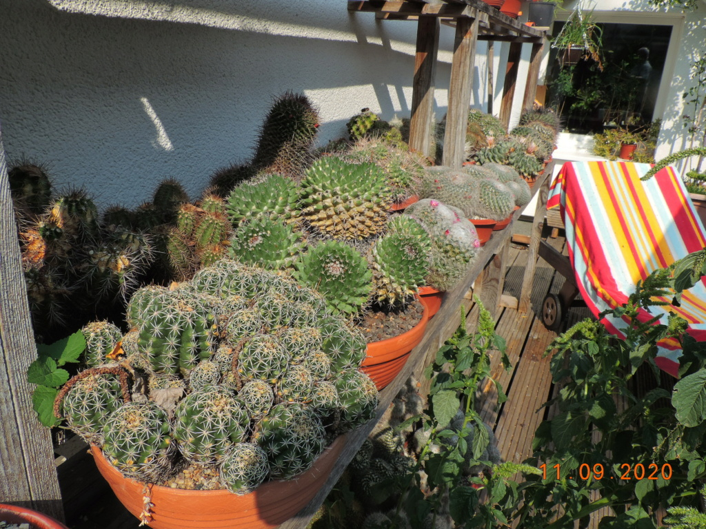 Cacti and Sukkulent in Köln, every day new flowers in the greenhouse Part 243 Bild6134