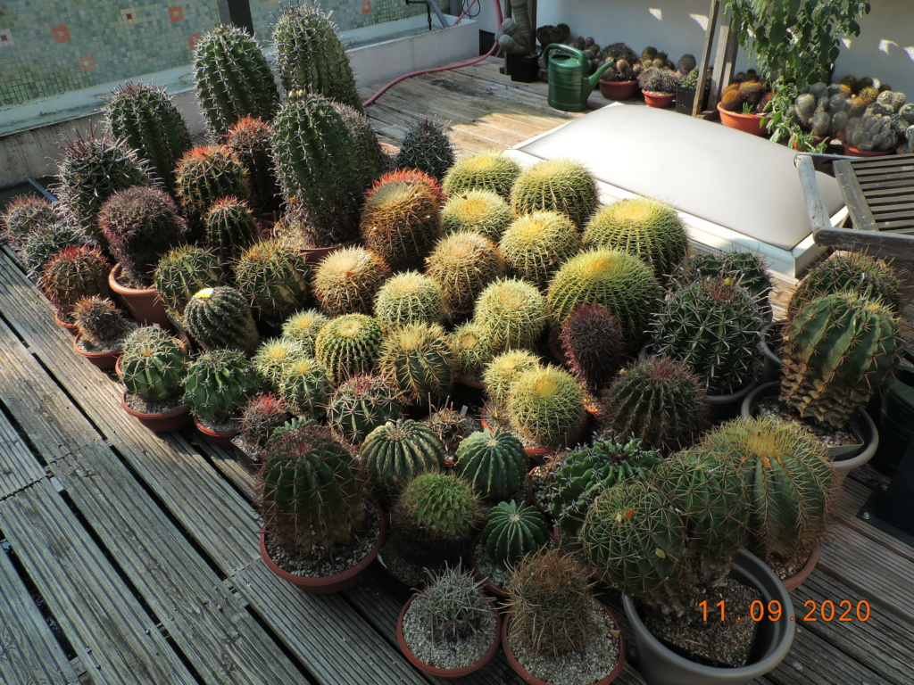Cacti and Sukkulent in Köln, every day new flowers in the greenhouse Part 243 Bild6135