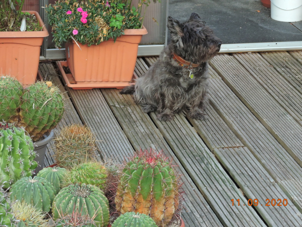 Cacti and Sukkulent in Köln, every day new flowers in the greenhouse Part 243 Bild6152