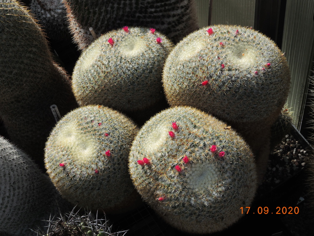 Cacti and Sukkulent in Köln, every day new flowers in the greenhouse Part 243 Bild6190