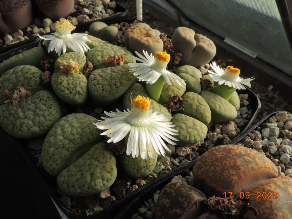 Cacti and Sukkulent in Köln, every day new flowers in the greenhouse Part 243 Bild6195