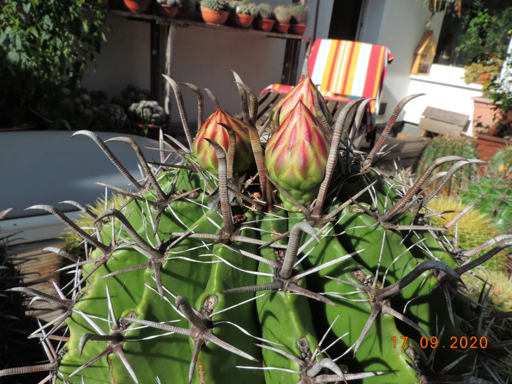 Cacti and Sukkulent in Köln, every day new flowers in the greenhouse Part 243 Bild6216