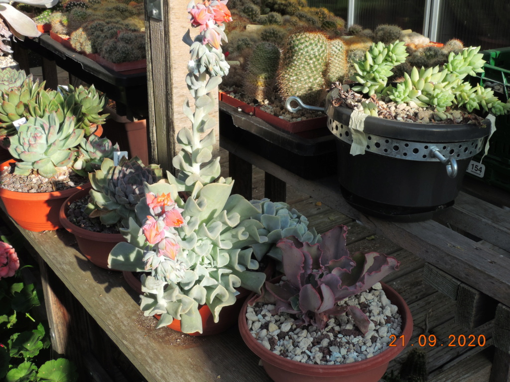 Cacti and Sukkulent in Köln, every day new flowers in the greenhouse Part 243 Bild6224