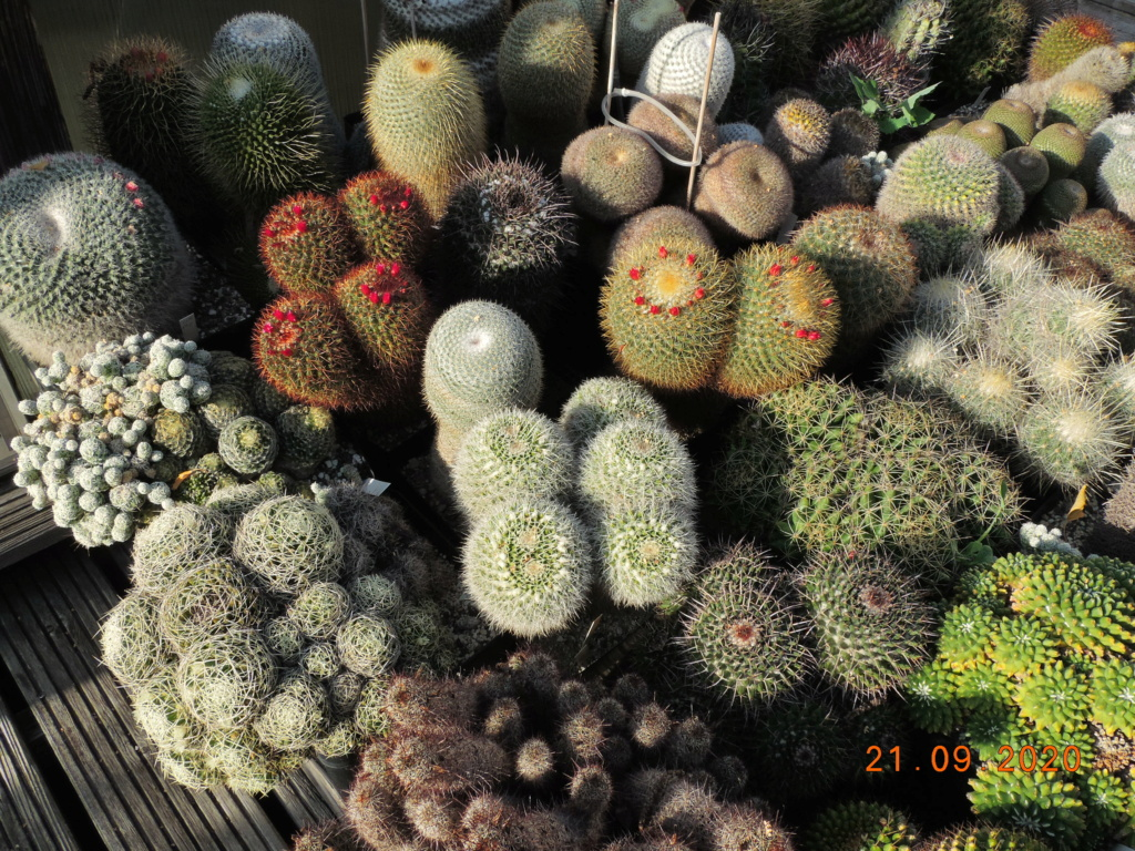 Cacti and Sukkulent in Köln, every day new flowers in the greenhouse Part 243 Bild6225