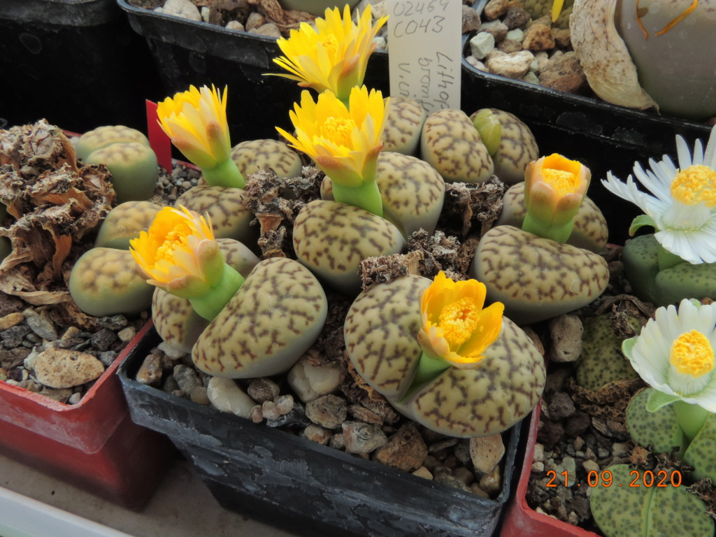 Cacti and Sukkulent in Köln, every day new flowers in the greenhouse Part 243 Bild6230