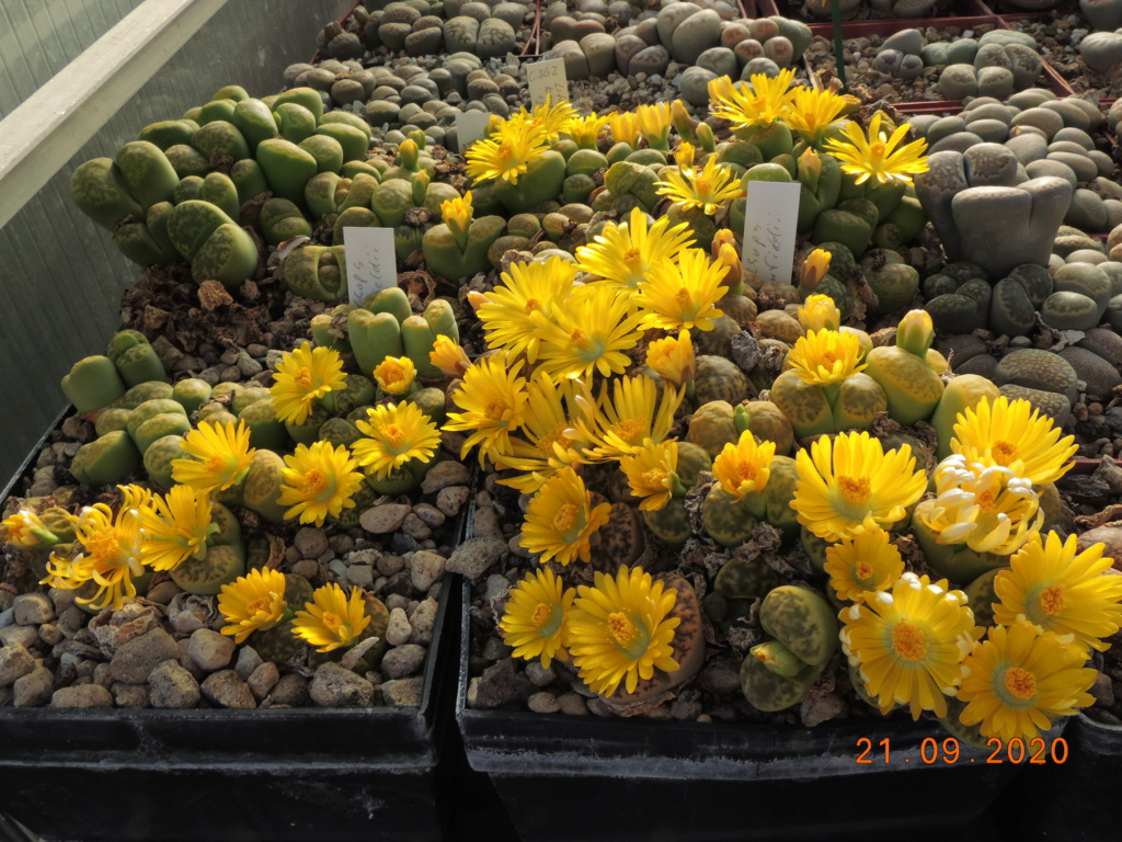 Cacti and Sukkulent in Köln, every day new flowers in the greenhouse Part 243 Bild6232