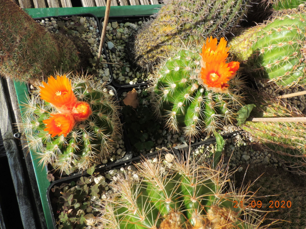 Cacti and Sukkulent in Köln, every day new flowers in the greenhouse Part 243 Bild6235