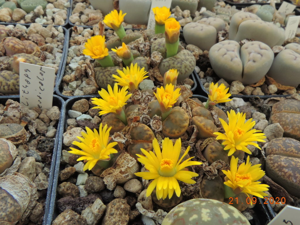 Cacti and Sukkulent in Köln, every day new flowers in the greenhouse Part 243 Bild6251