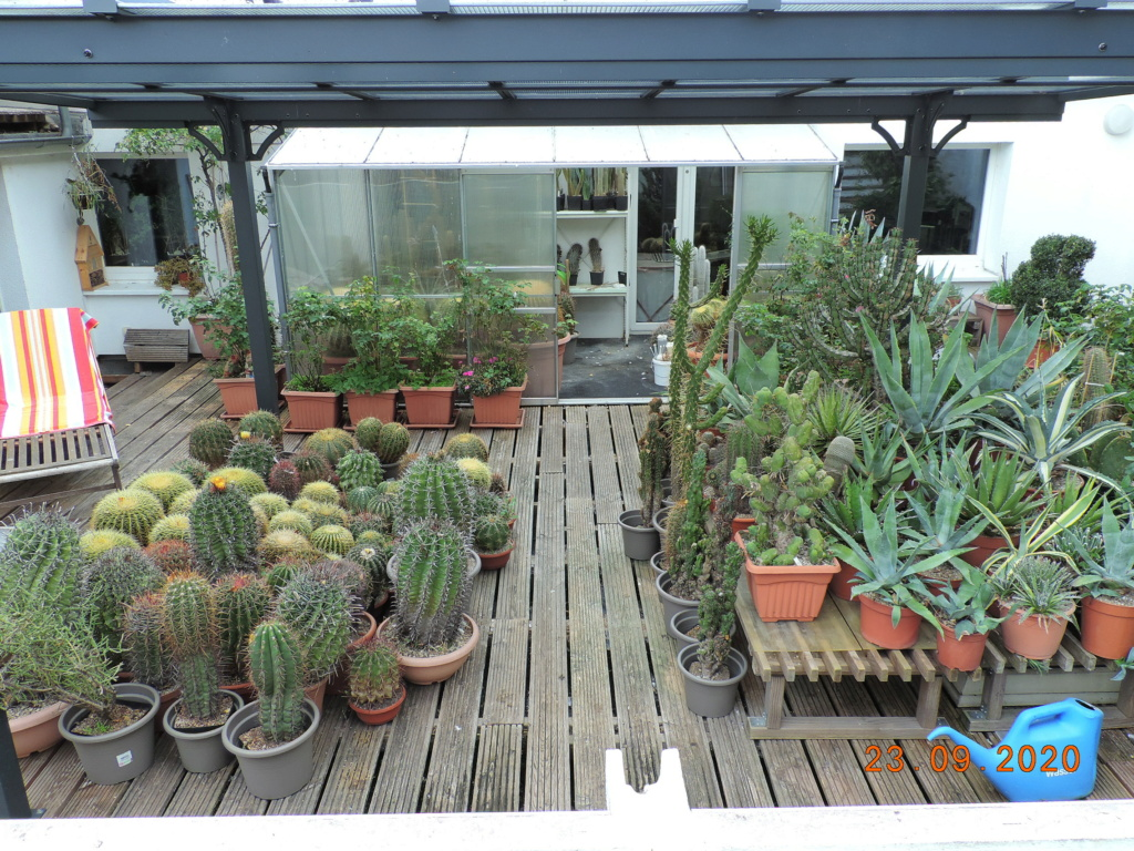 Cacti and Sukkulent in Köln, every day new flowers in the greenhouse Part 243 Bild6257