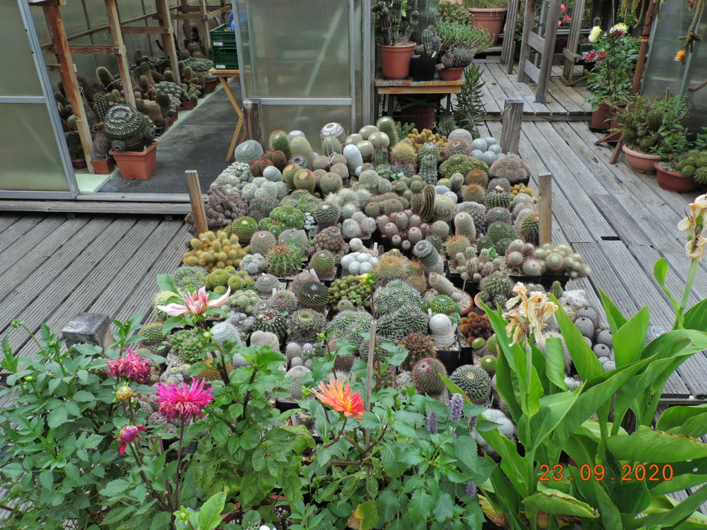 Cacti and Sukkulent in Köln, every day new flowers in the greenhouse Part 243 Bild6260