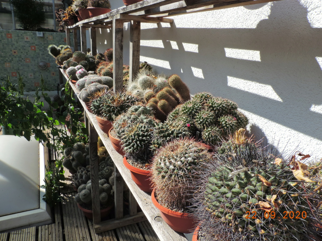 Cacti and Sukkulent in Köln, every day new flowers in the greenhouse Part 243 Bild6279