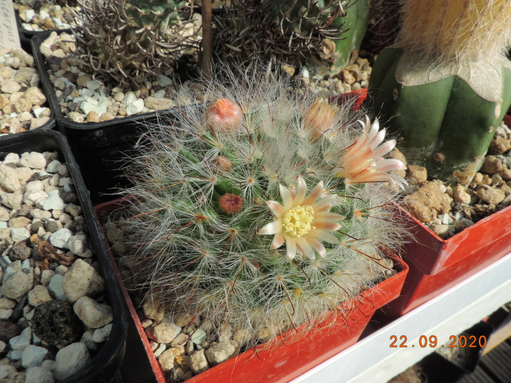Cacti and Sukkulent in Köln, every day new flowers in the greenhouse Part 243 Bild6285