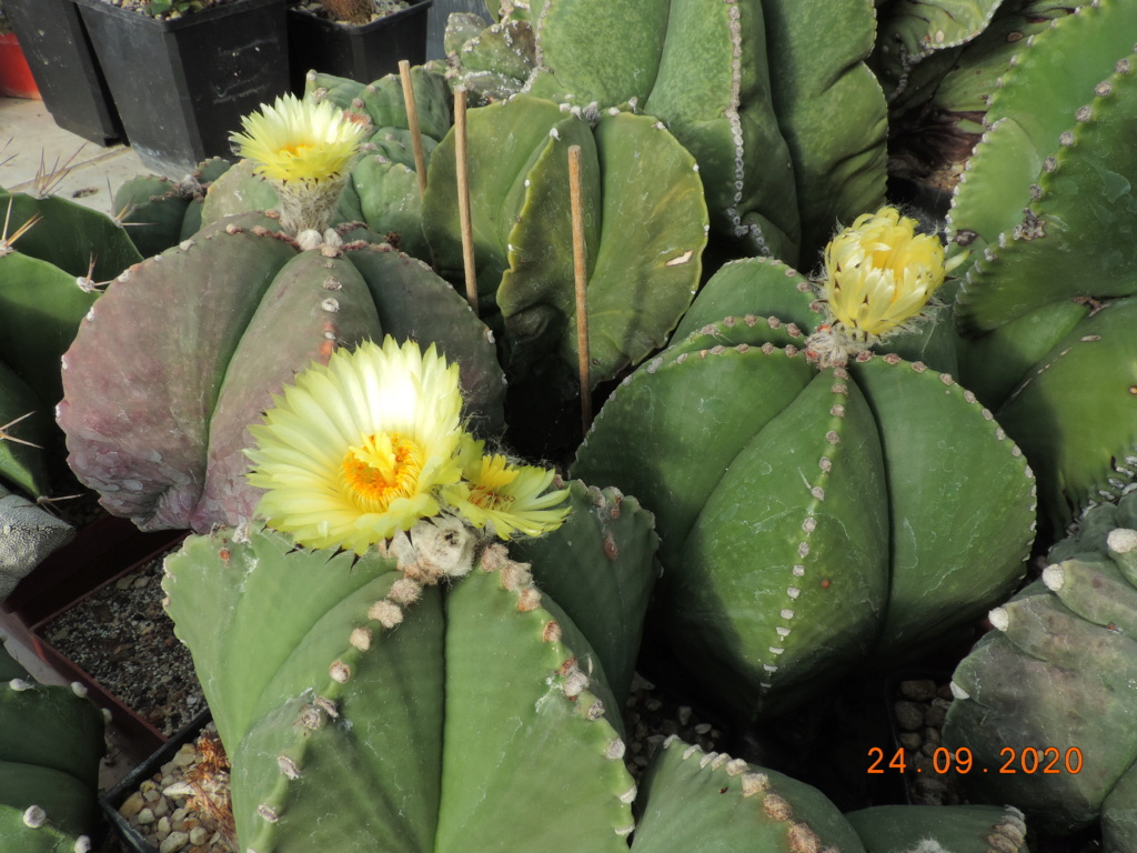 Cacti and Sukkulent in Köln, every day new flowers in the greenhouse Part 243 Bild6296