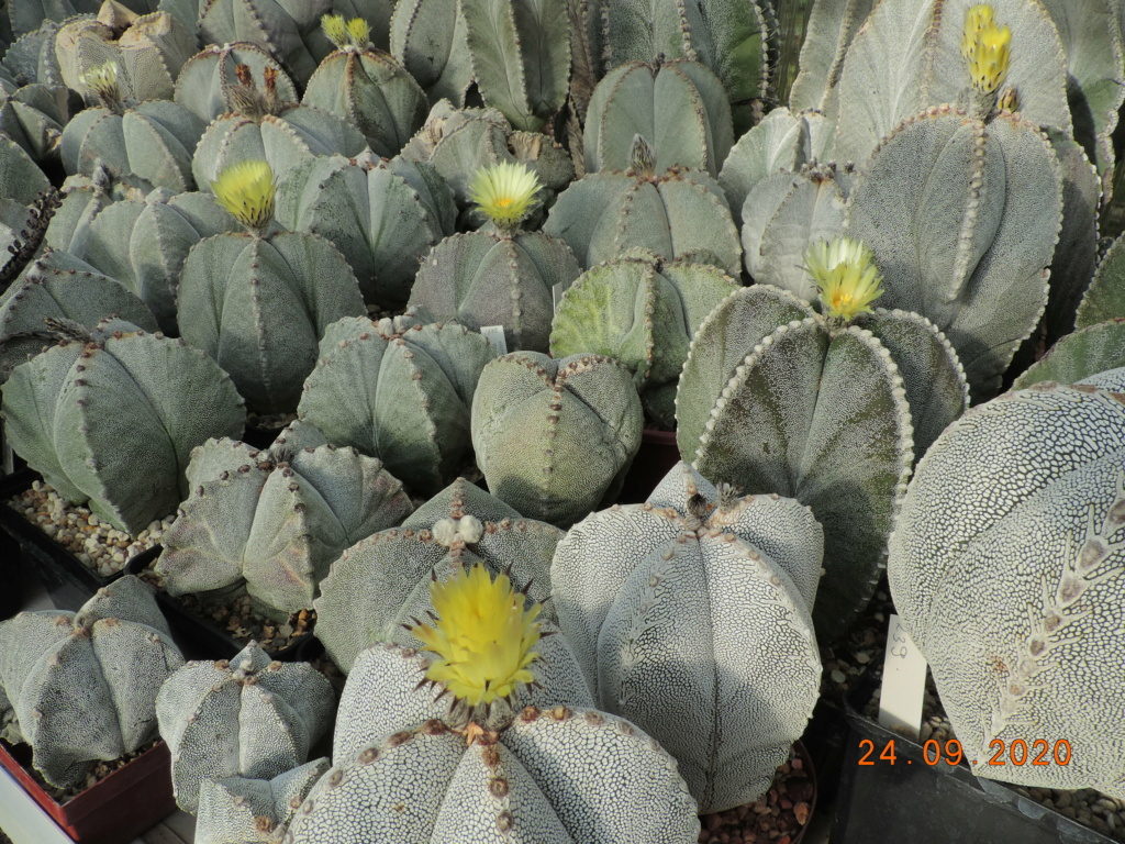 Cacti and Sukkulent in Köln, every day new flowers in the greenhouse Part 243 Bild6302