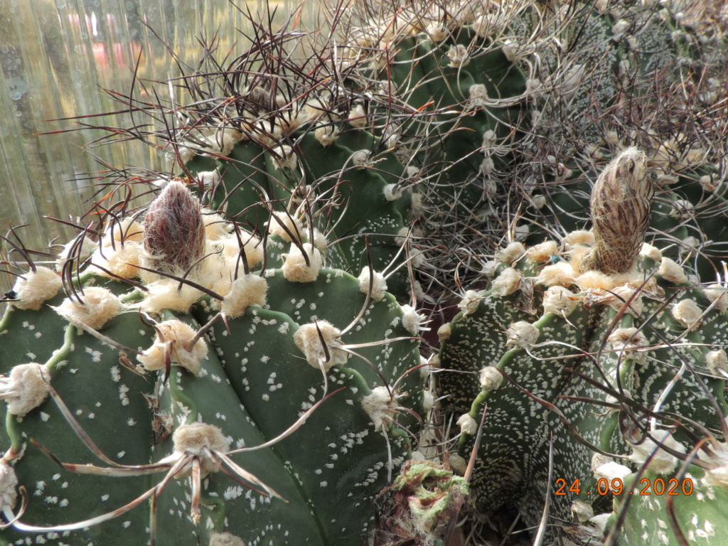 Cacti and Sukkulent in Köln, every day new flowers in the greenhouse Part 243 Bild6303