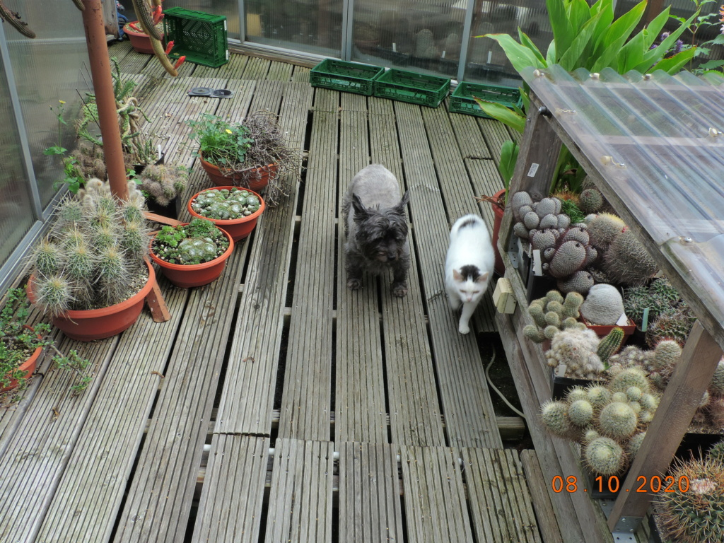 Cacti and Sukkulent in Köln, every day new flowers in the greenhouse Part 245 Bild6443