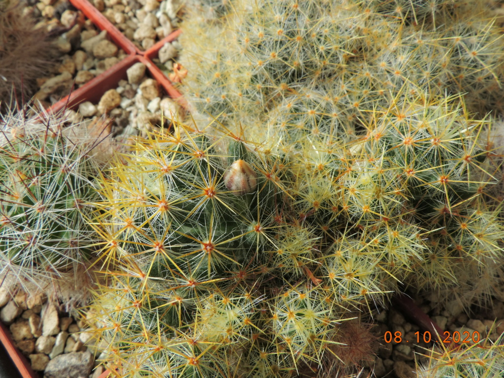 Cacti and Sukkulent in Köln, every day new flowers in the greenhouse Part 245 Bild6445