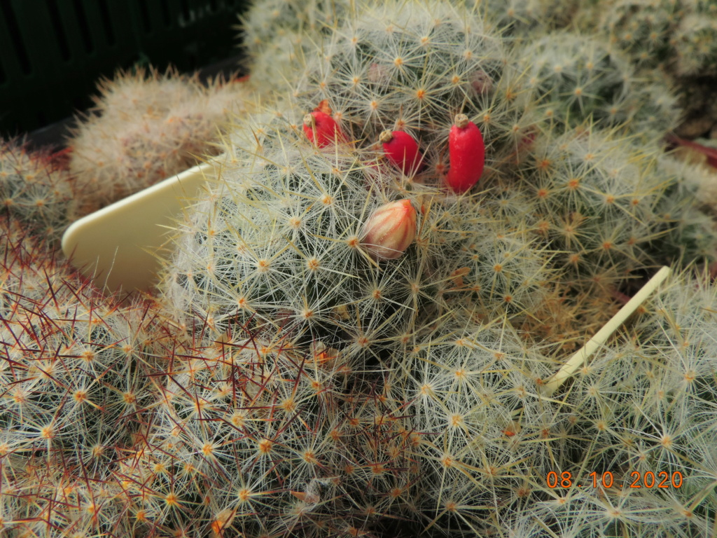 Cacti and Sukkulent in Köln, every day new flowers in the greenhouse Part 245 Bild6446