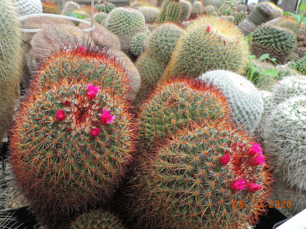 Cacti and Sukkulent in Köln, every day new flowers in the greenhouse Part 245 Bild6448