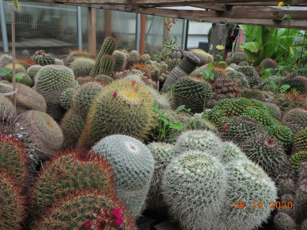 Cacti and Sukkulent in Köln, every day new flowers in the greenhouse Part 245 Bild6449