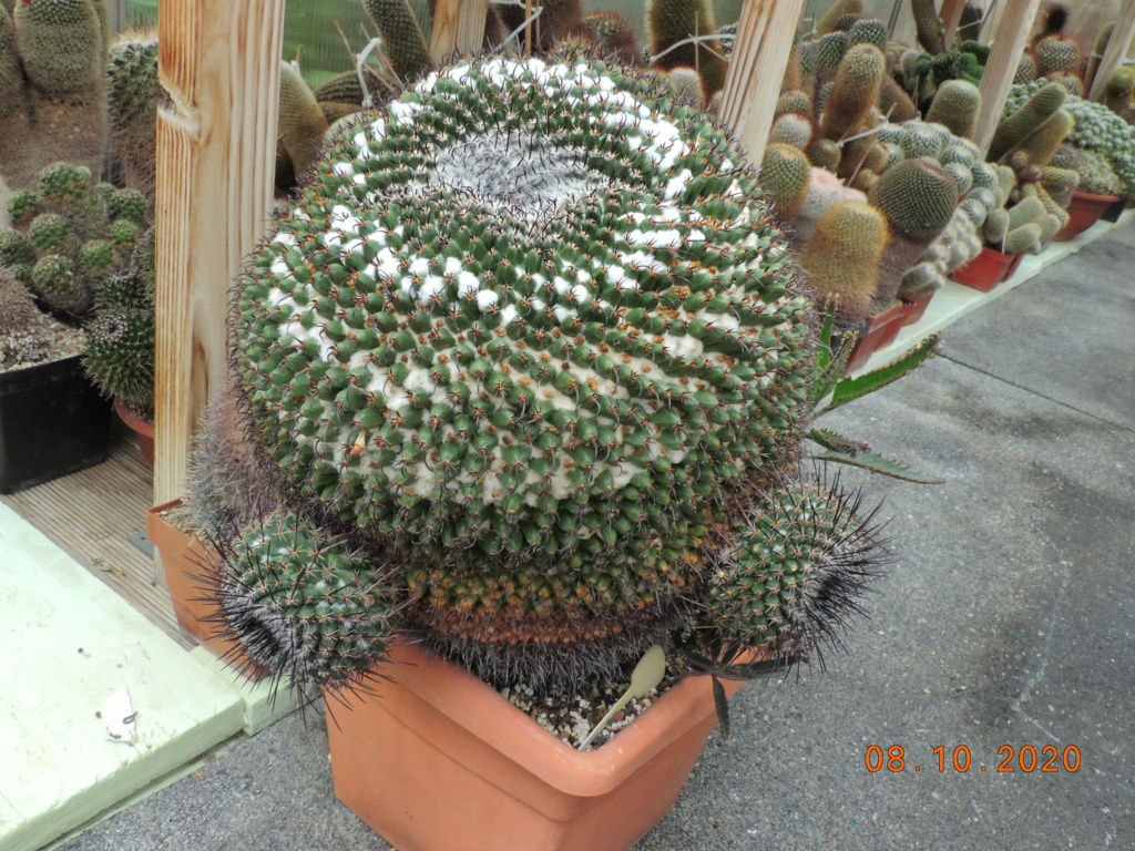Cacti and Sukkulent in Köln, every day new flowers in the greenhouse Part 245 Bild6450