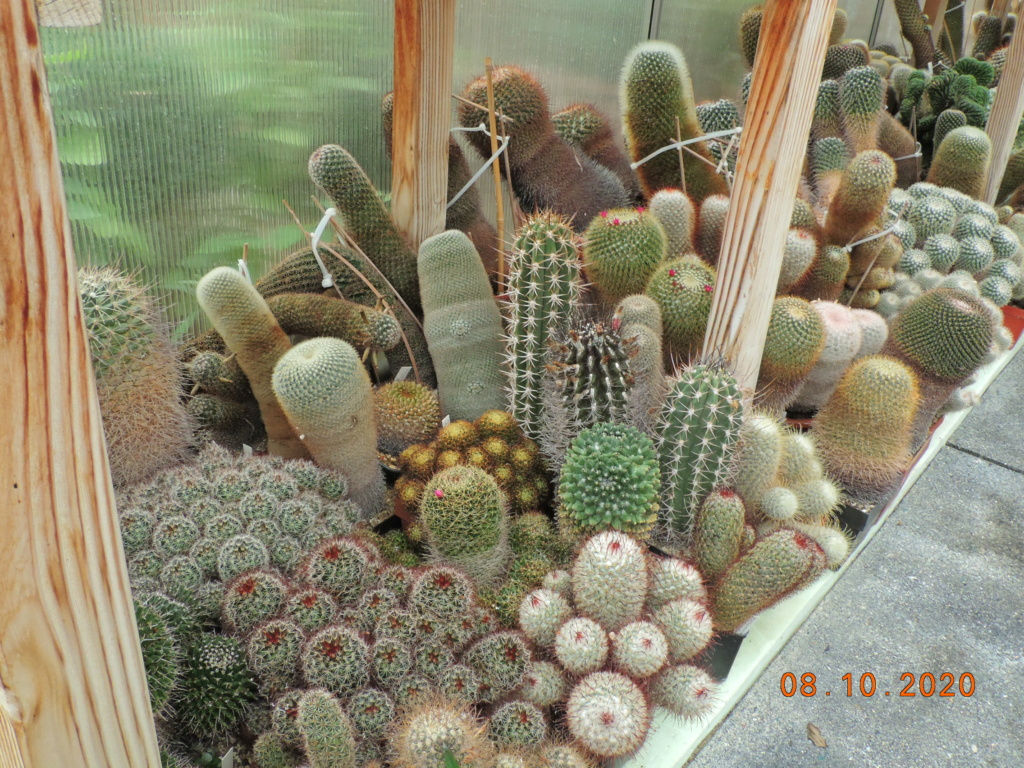 Cacti and Sukkulent in Köln, every day new flowers in the greenhouse Part 245 Bild6451