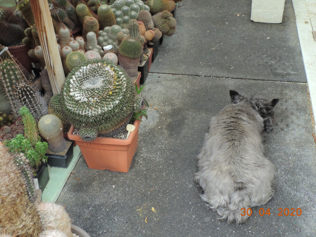 Cacti and Sukkulent in Köln, every day new flowers in the greenhouse Part 245 Bild6455