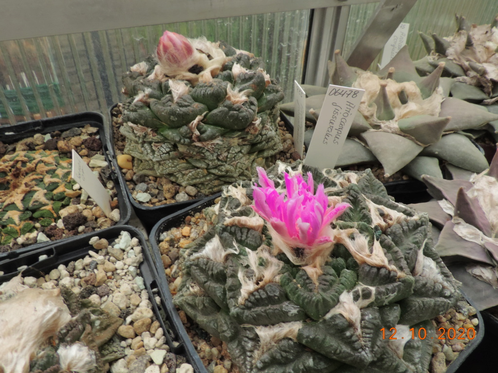 Cacti and Sukkulent in Köln, every day new flowers in the greenhouse Part 245 Bild6470