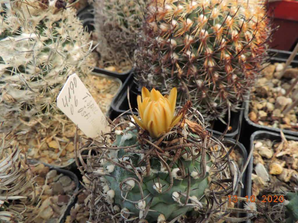 Cacti and Sukkulent in Köln, every day new flowers in the greenhouse Part 245 Bild6483