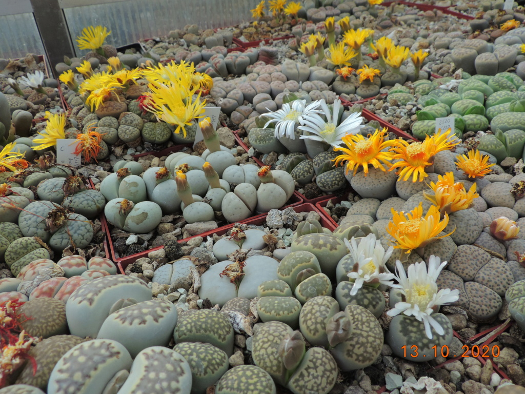 Cacti and Sukkulent in Köln, every day new flowers in the greenhouse Part 245 Bild6492