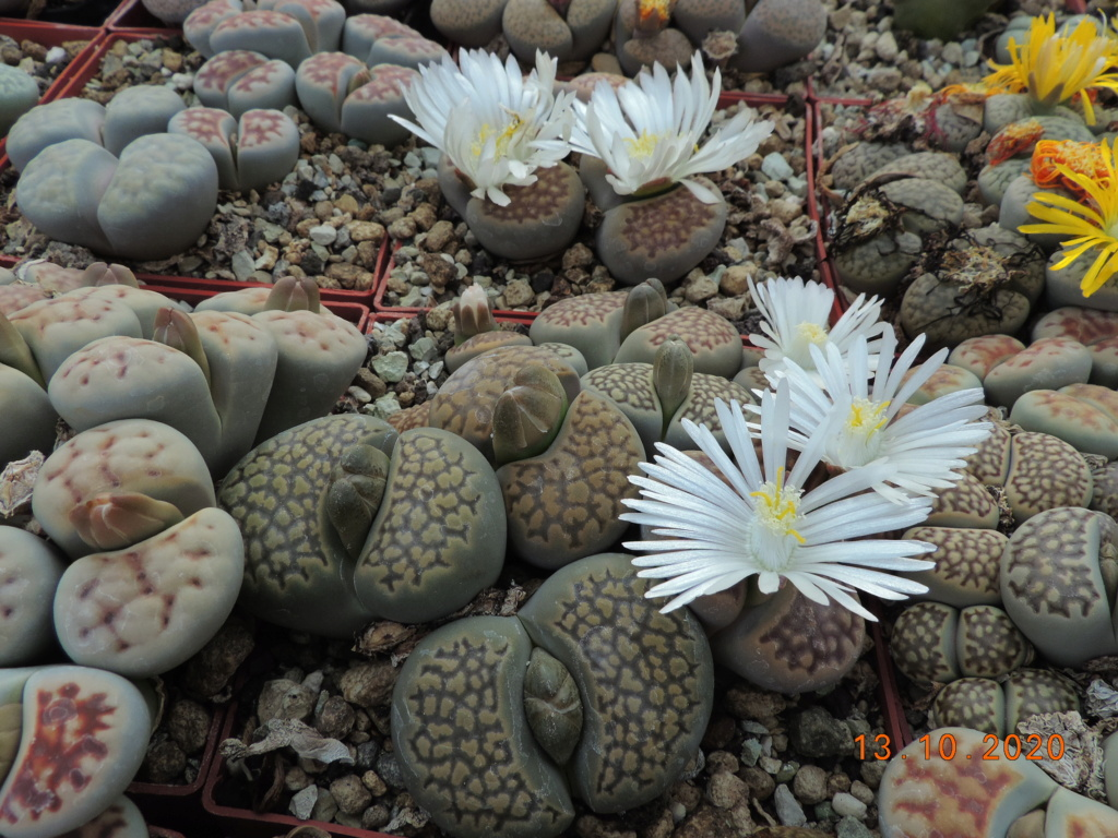 Cacti and Sukkulent in Köln, every day new flowers in the greenhouse Part 245 Bild6493