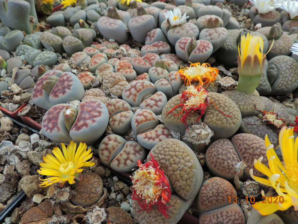 Cacti and Sukkulent in Köln, every day new flowers in the greenhouse Part 245 Bild6494