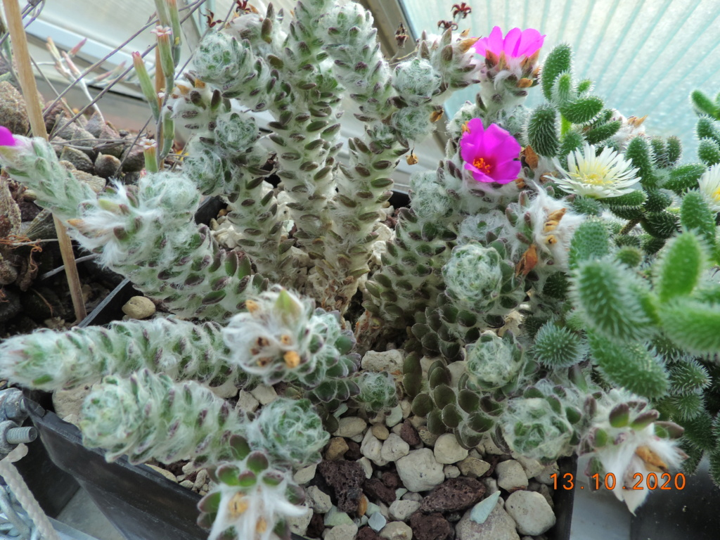 Cacti and Sukkulent in Köln, every day new flowers in the greenhouse Part 245 Bild6498