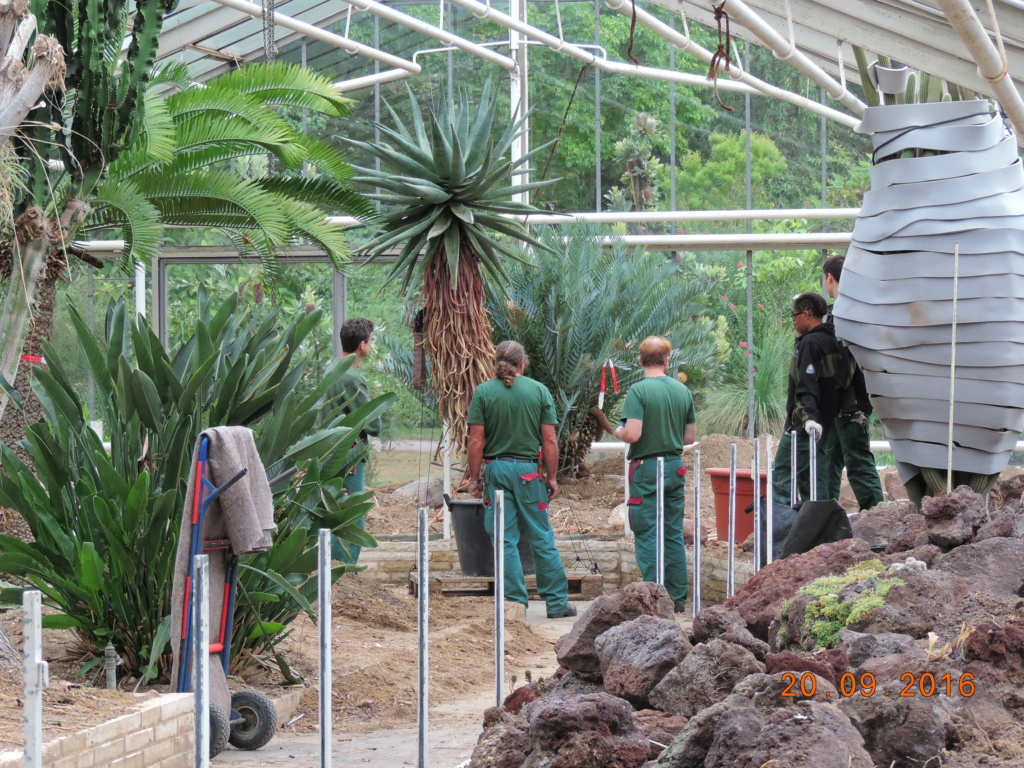 Cacti and Sukkulent in Köln, every day new flowers in the greenhouse Part 245 Bild6513