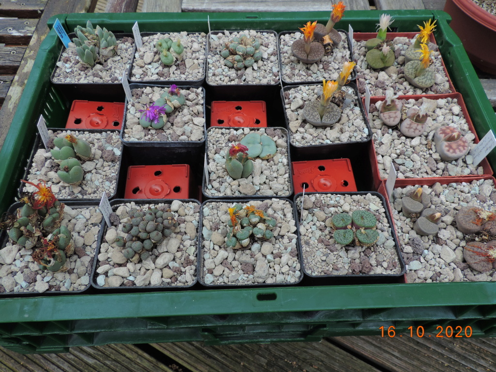 Cacti and Sukkulent in Köln, every day new flowers in the greenhouse Part 245 Bild6529