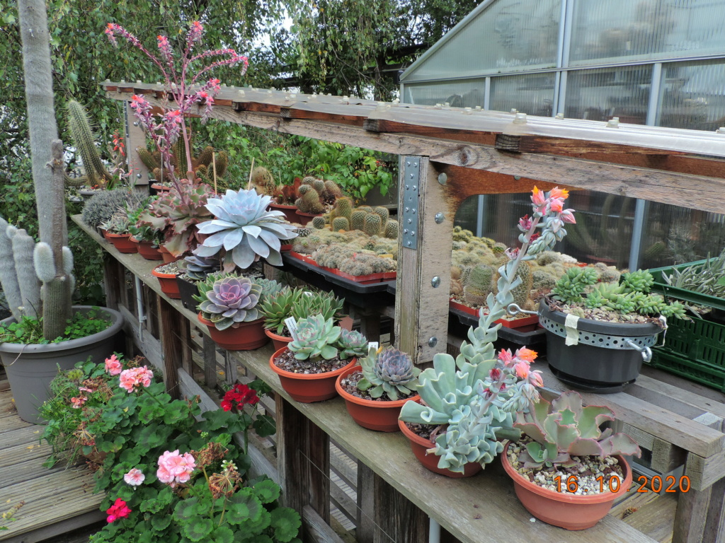 Cacti and Sukkulent in Köln, every day new flowers in the greenhouse Part 245 Bild6538