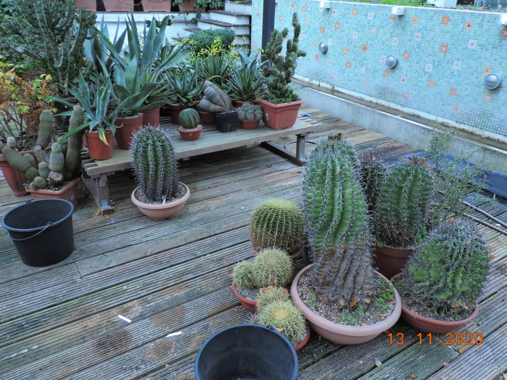 Cacti and Sukkulent in Köln, every day new flowers in the greenhouse Part 248 Bild6754