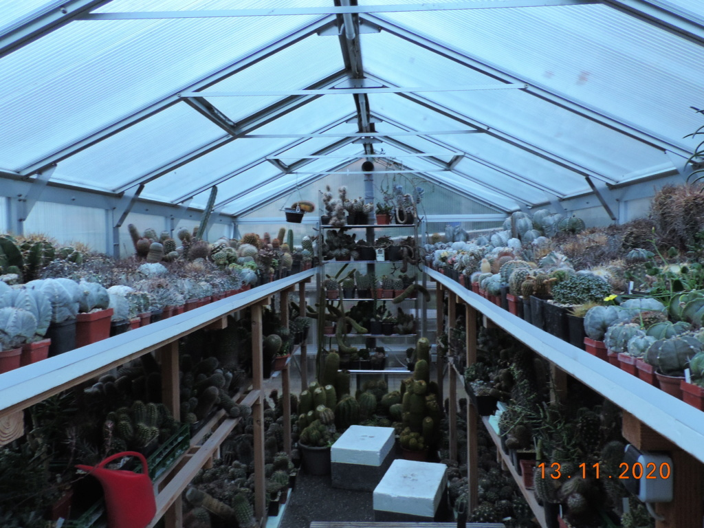 Cacti and Sukkulent in Köln, every day new flowers in the greenhouse Part 248 Bild6757