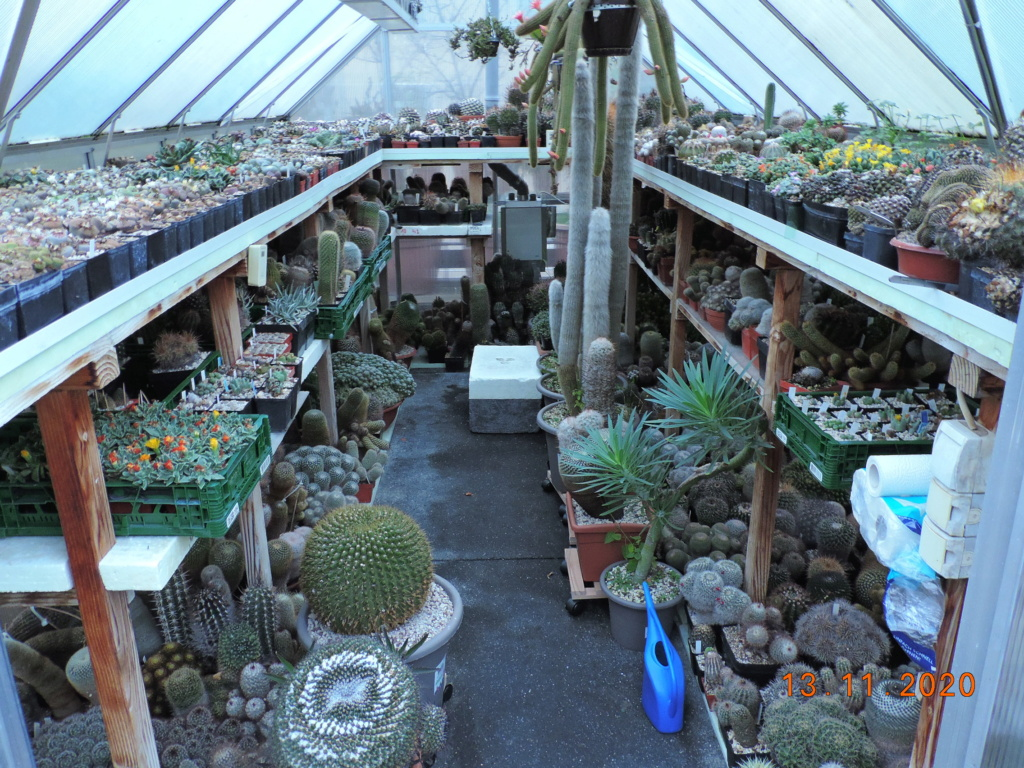 Cacti and Sukkulent in Köln, every day new flowers in the greenhouse Part 248 Bild6758
