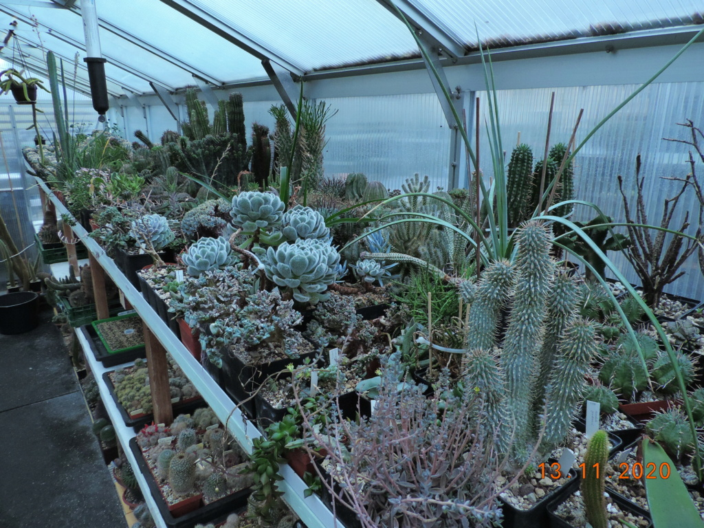 Cacti and Sukkulent in Köln, every day new flowers in the greenhouse Part 248 Bild6760