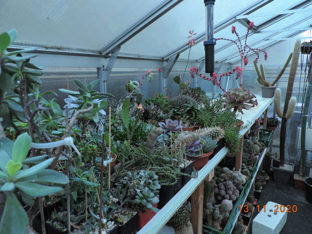 Cacti and Sukkulent in Köln, every day new flowers in the greenhouse Part 248 Bild6761