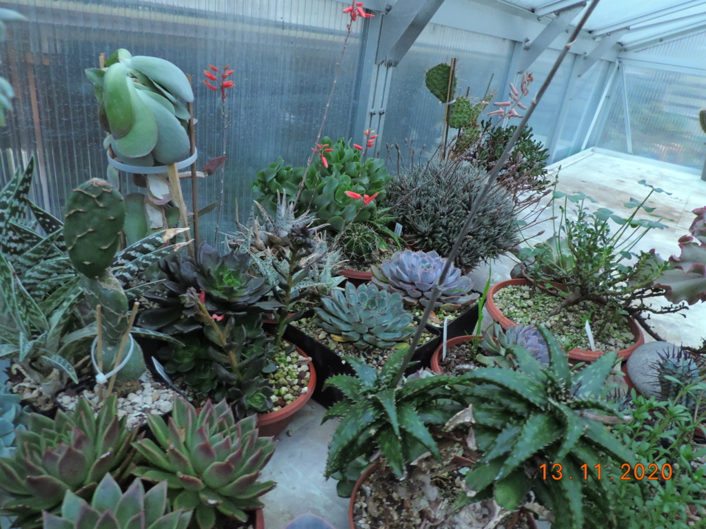 Cacti and Sukkulent in Köln, every day new flowers in the greenhouse Part 248 Bild6762