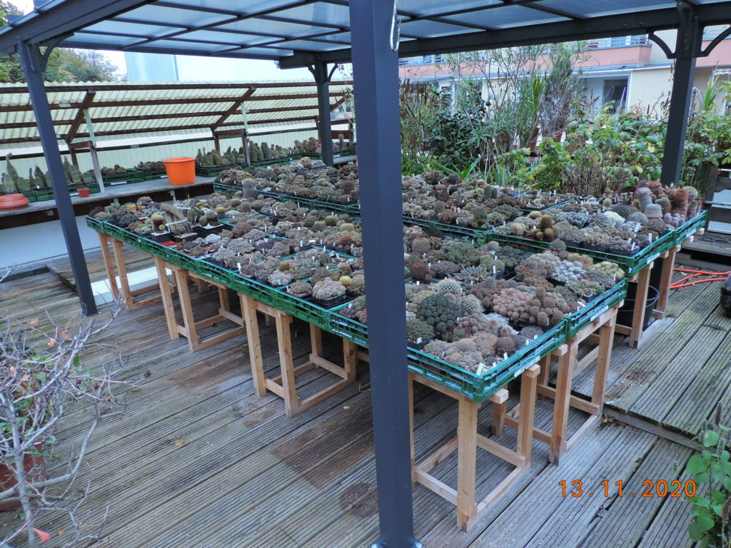 Cacti and Sukkulent in Köln, every day new flowers in the greenhouse Part 248 Bild6763