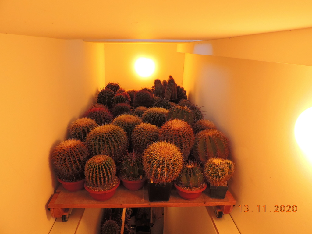 Cacti and Sukkulent in Köln, every day new flowers in the greenhouse Part 248 Bild6767