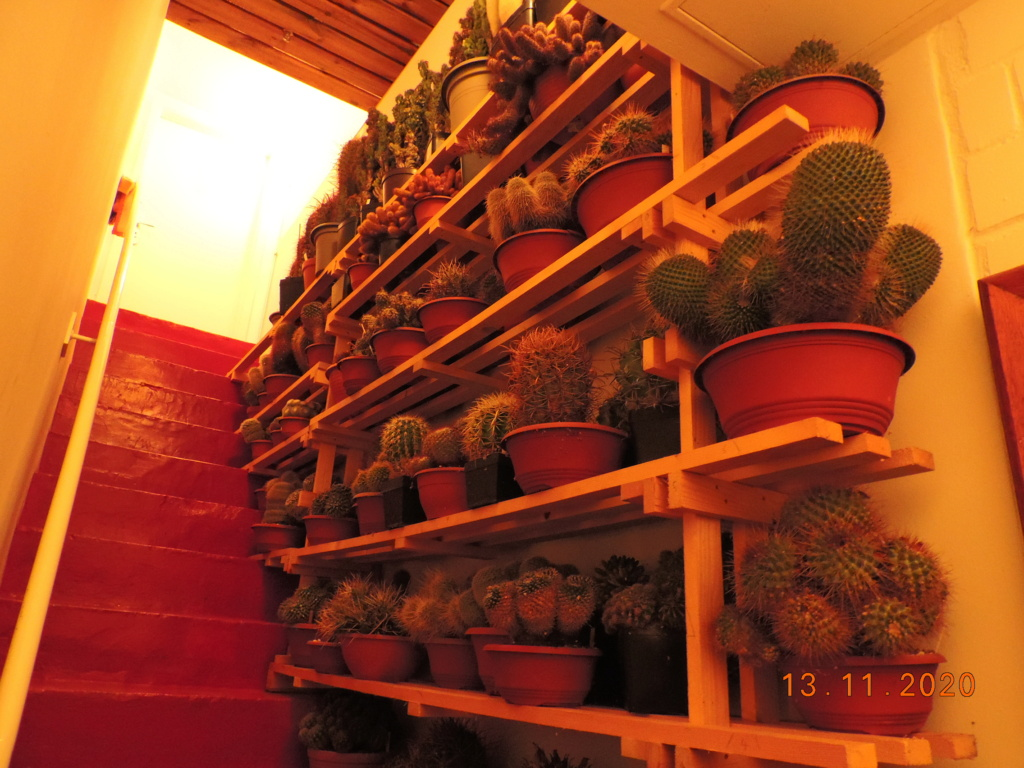 Cacti and Sukkulent in Köln, every day new flowers in the greenhouse Part 248 Bild6769