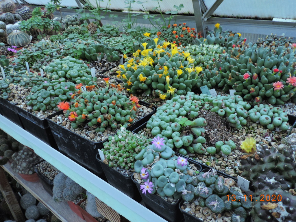 Cacti and Sukkulent in Köln, every day new flowers in the greenhouse Part 248 Bild6772