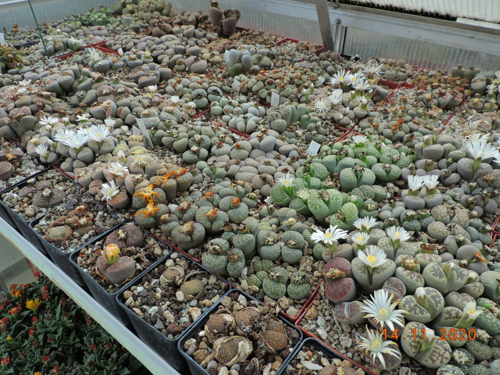 Cacti and Sukkulent in Köln, every day new flowers in the greenhouse Part 248 Bild6801