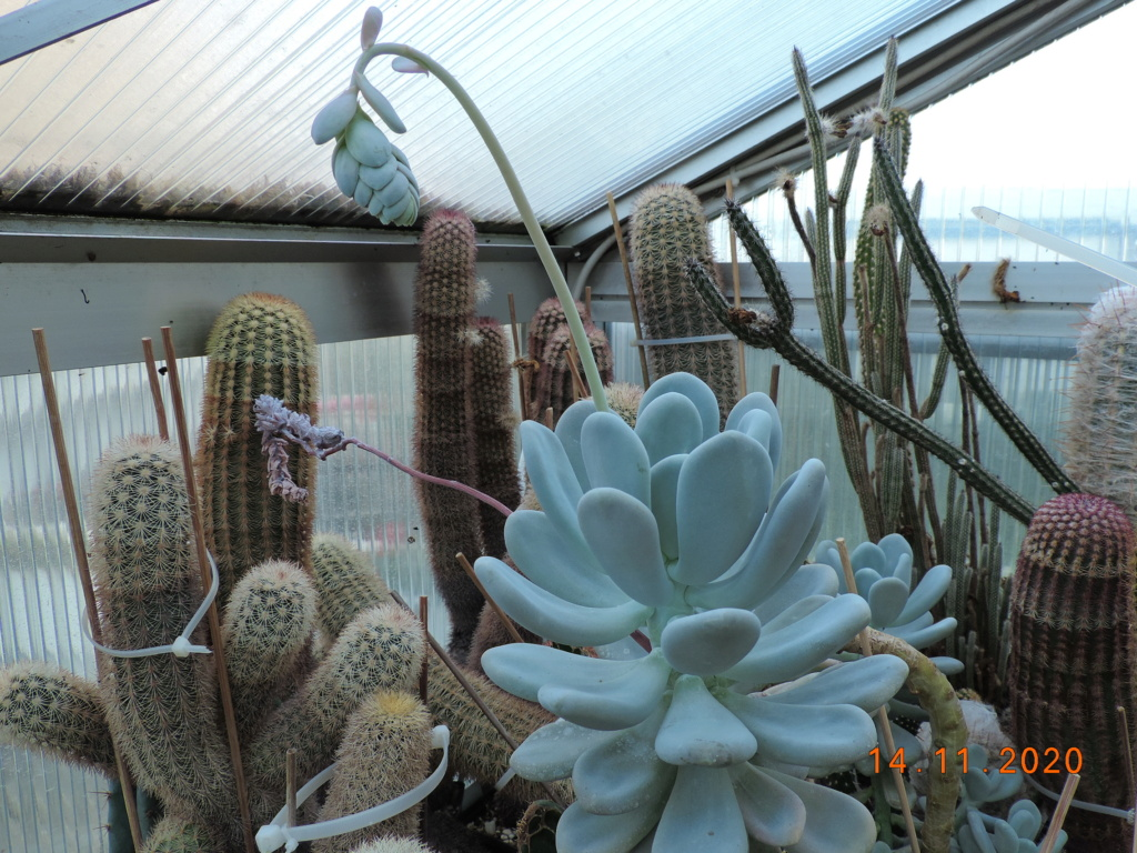 Cacti and Sukkulent in Köln, every day new flowers in the greenhouse Part 248 Bild6807