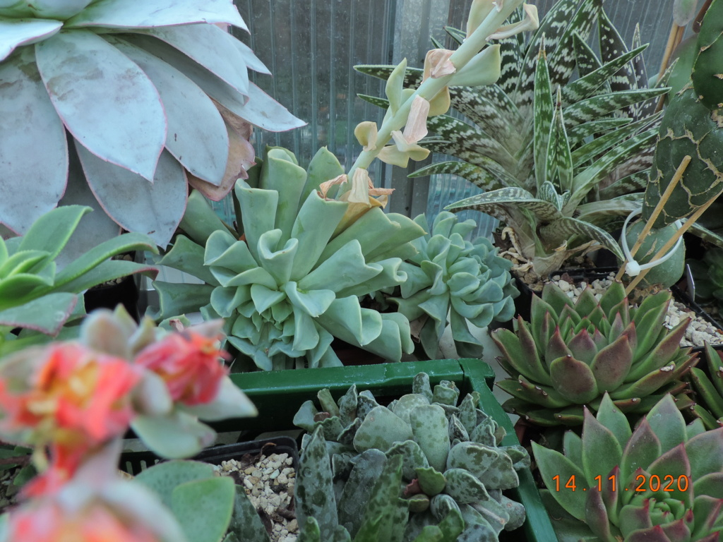 Cacti and Sukkulent in Köln, every day new flowers in the greenhouse Part 248 Bild6814